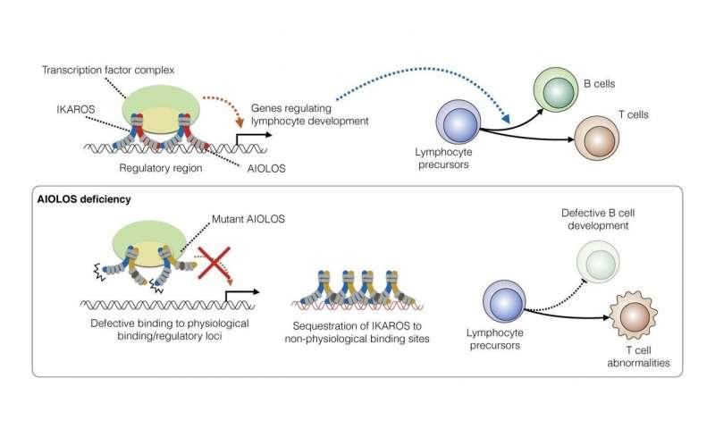 Když šílený AIOLOS stáhne IKAROS dolů: Nový patogenní mechanismus