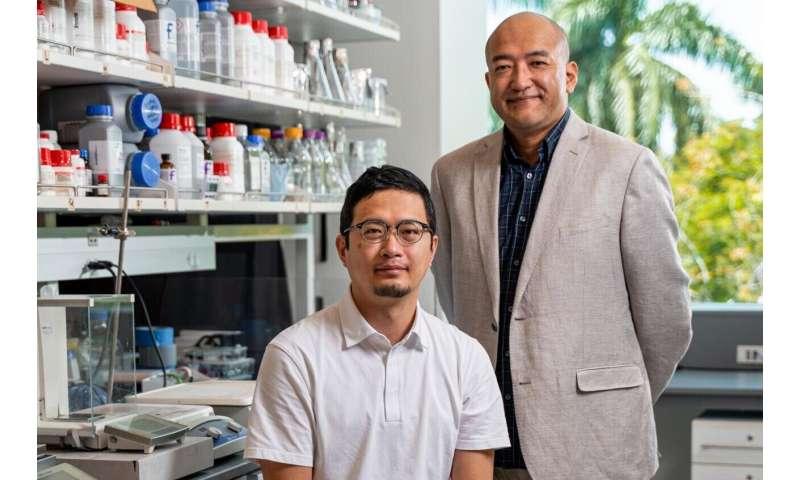 Molekulinis tiltas tarpininkauja slopinančiai sinapsės specifikai žievėje