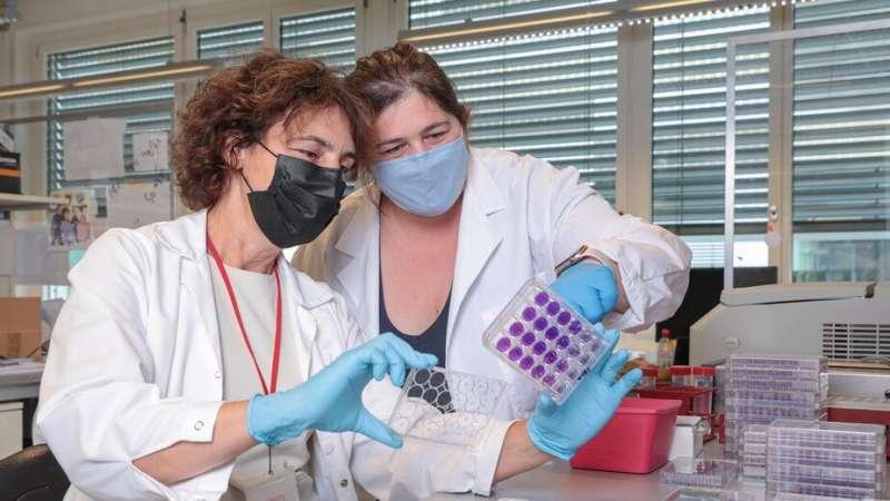 Novo teste de sangue mede imunidade contra SARS-CoV-2