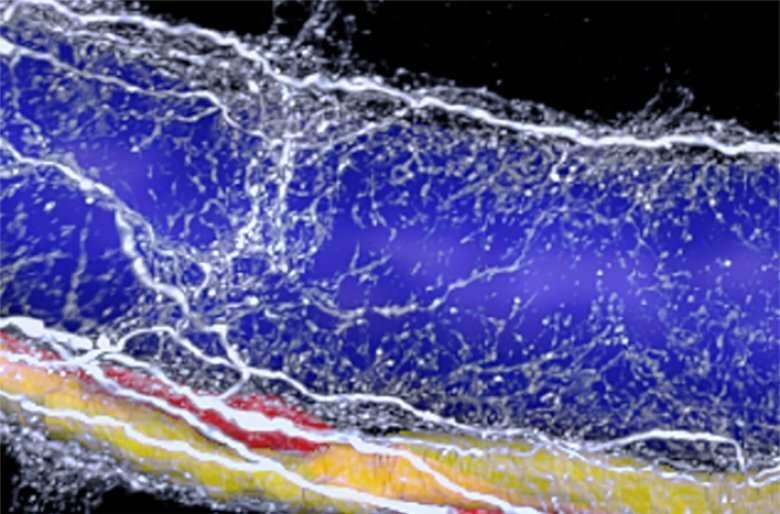 """Imagistica 3D dezvăluie """"ciclul vicios"""" neuronal în boala ficatului gras"""