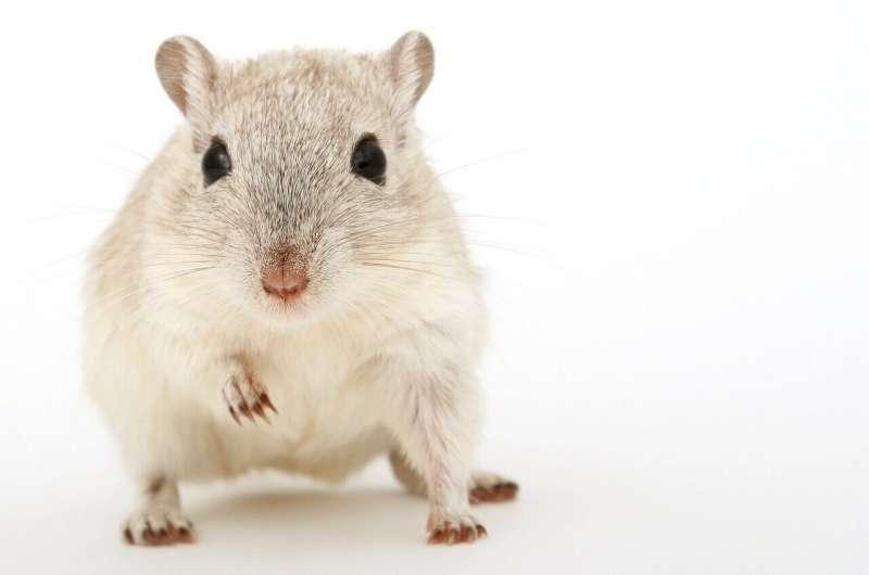 ποντίκια