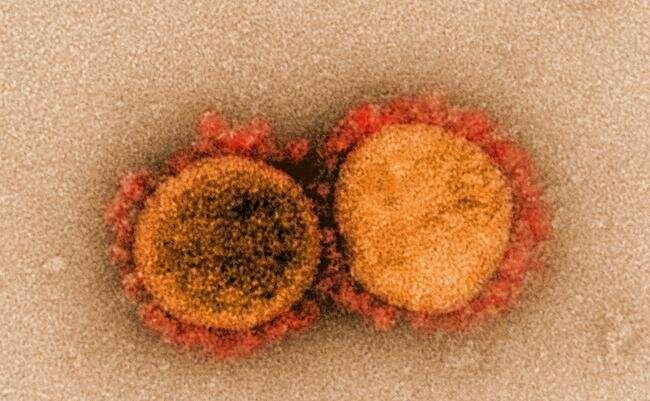 SARS-CoV-2, COVID-19