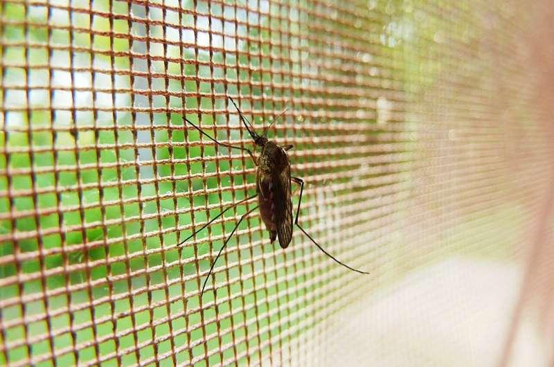 malárie