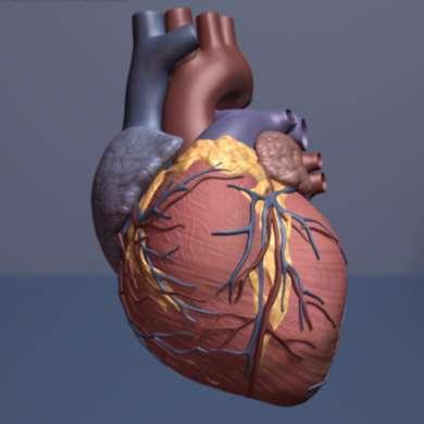 srdce