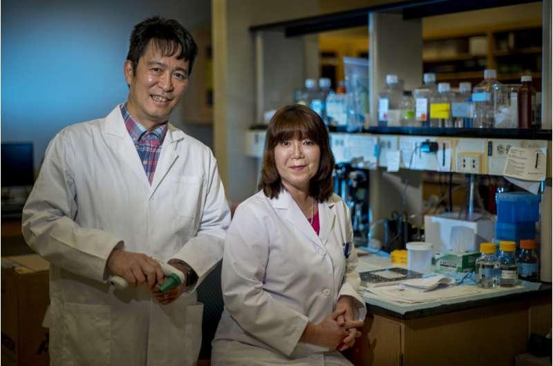 Potencial de transportador de cobre novo alvo de tratamento para doenças cardiovasculares