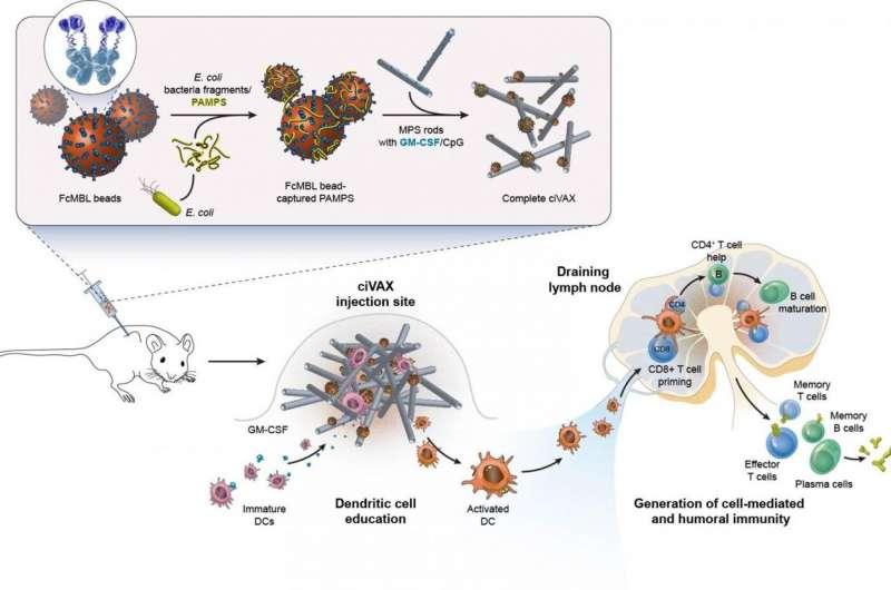 Biomateriaalvaccins weren een breed scala aan bacteriële infecties en septische shock af