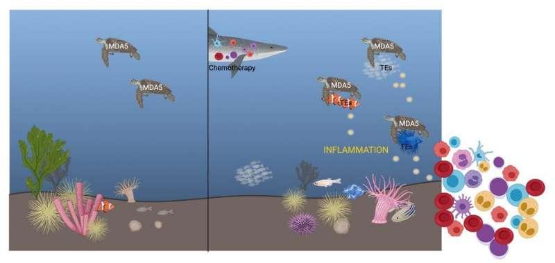 """Snímání """"zbytečné"""" RNA po chemoterapii zvyšuje regeneraci krve"""