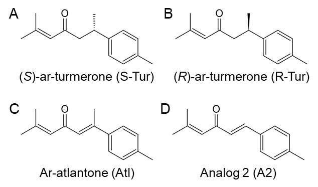 Sloučenina odvozená z kurkumového éterického oleje má neuroprotektivní vlastnosti