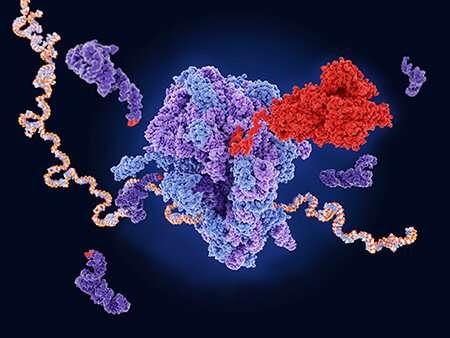O moleculă mică induce readutarea mutațiilor fără sens a fibrozei chistice CFTR