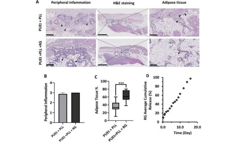 Regeneracja tkanek miękkich w bezkomórkowym środowisku rusztowania