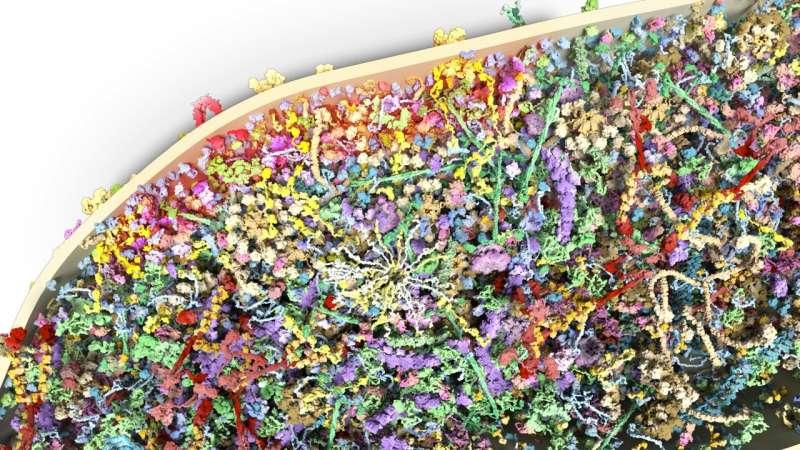 Rozsáhlé vyšetření proteinového složení dendritických trnů