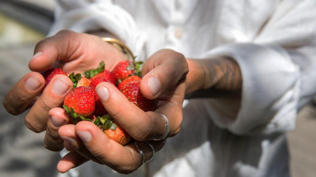 close-up van handen met aardbeien
